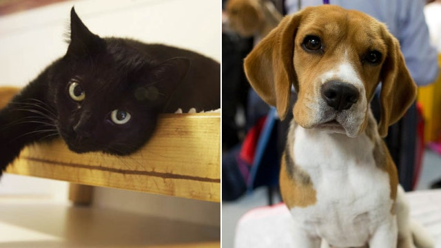 Study suggests cats are as smart as dogs