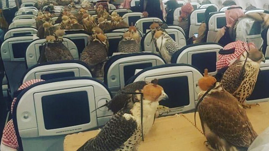 Reddit user posts photo of a Saudi prince's 80 falcons aboard a flight, sitting in coach along with other passengers