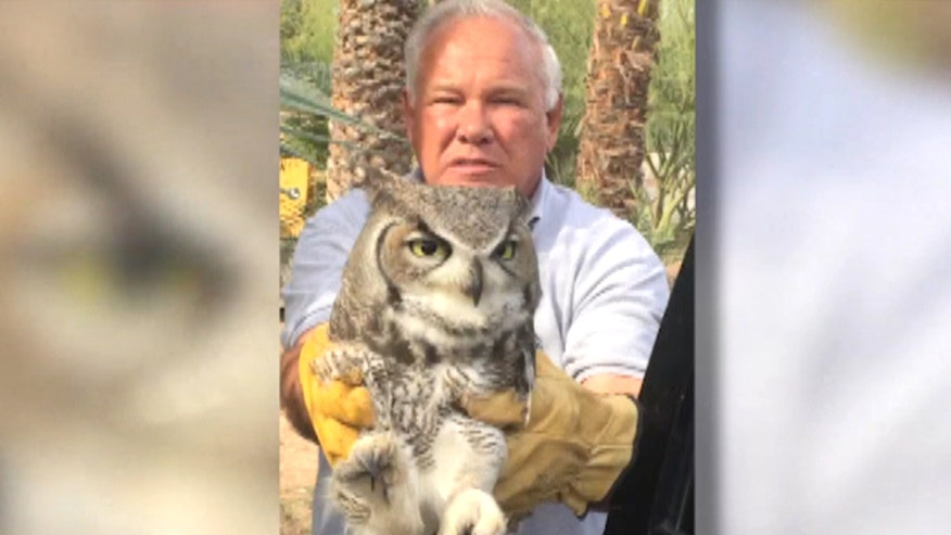 Majestic bird is being nursed back to health in Arizona