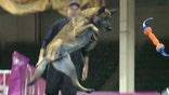 A look at the North America Diving Dogs Competition in Denver