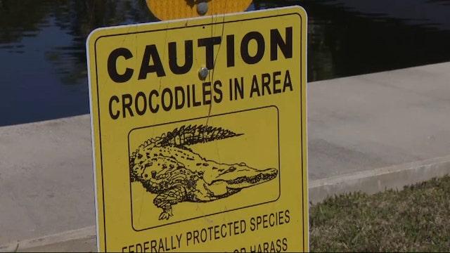 Community on edge after crocodile attacks family dog