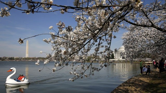 National Park Service releases DC cherry blossom prediction