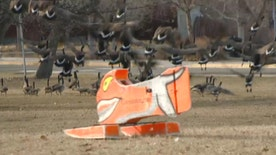 Wildlife Managers use the remote-controlled invention to chase geese out of the parks