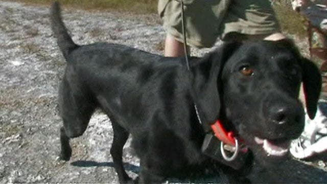 Sniffer dogs remove pythons from Everglades