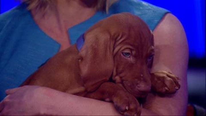 Dana Perino Shows Off Her New Puppy, Jasper!