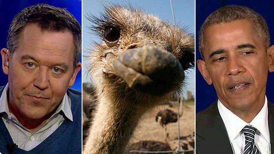 Gutfeld: The White House mascot should be an ostrich