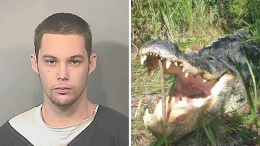 Officials believe the gator killed and partially ate a Florida man hiding from police in a lake