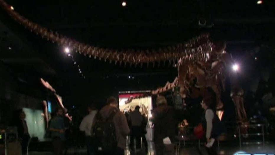 Titanosaur on display at American Museum of Natural History