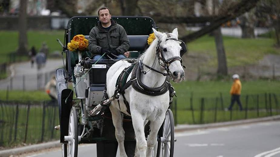 But aren't trips around the city exciting for horses?