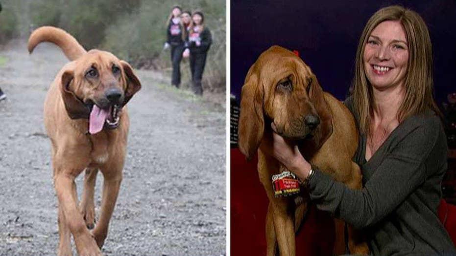 Dog accidentally runs half marathon, comes in 7th place