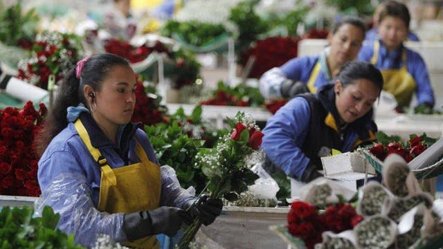 Billions of fresh cut flowers imported for Valentine's Day