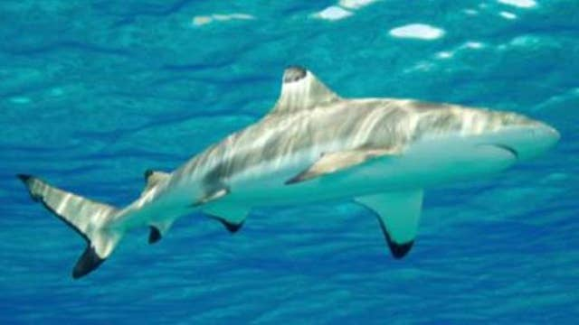 Tens of thousands of sharks seen migrating off Fla. coast