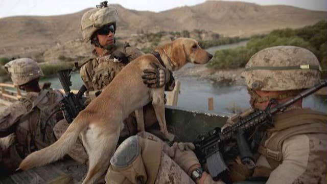 Report: Army ditches heroic war dogs