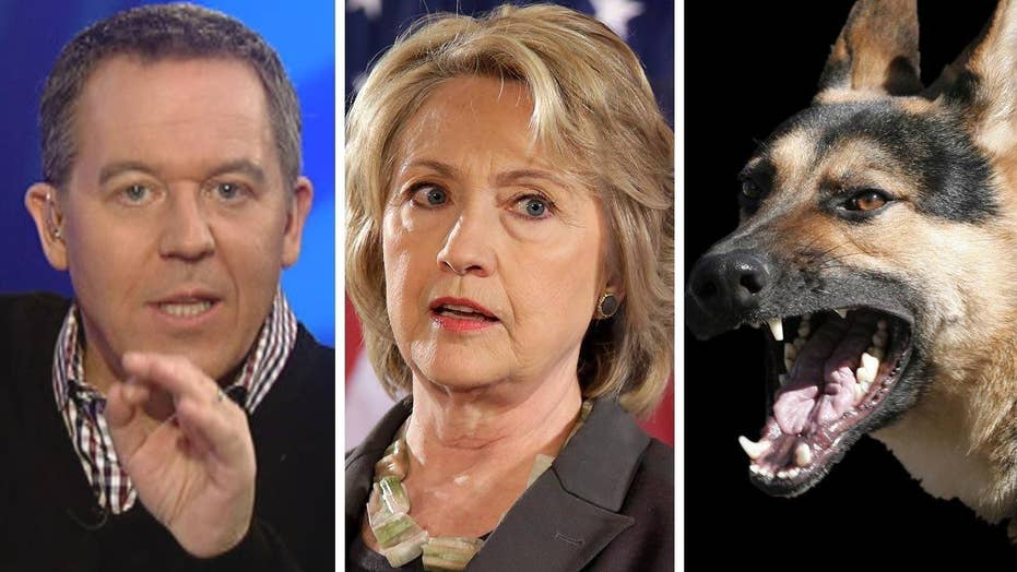 Gutfeld: Hillary's campaign is going to the dogs