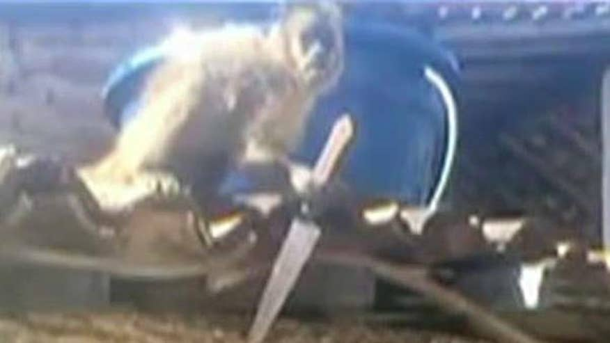Capuchin monkey reportedly finishing off customers' drinks before grabbing weapon and attacking males at bar in Brazil