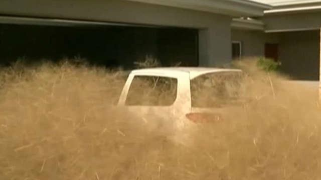 Tumbleweed takeover! Town overrun by wild weed