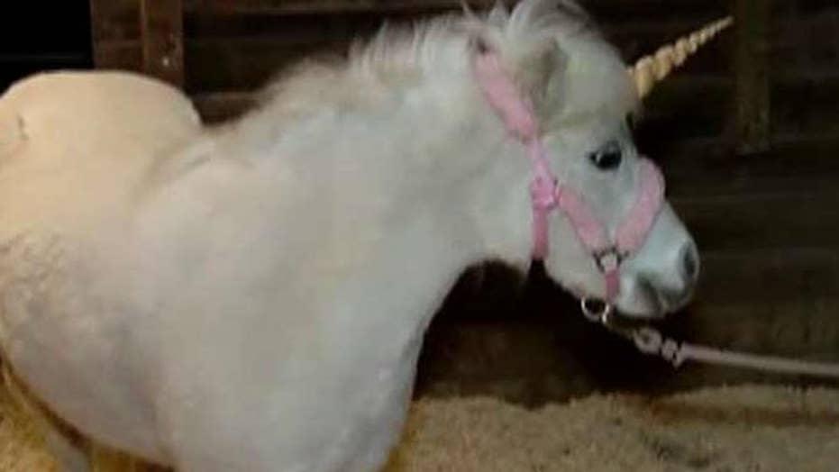 Police chase runaway 'unicorn'