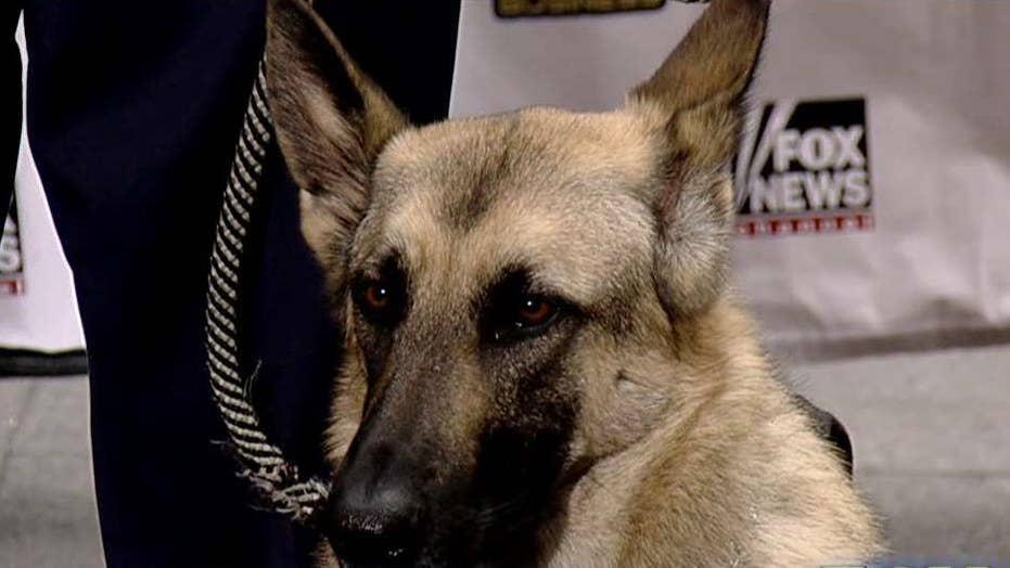 'Paws Act' would provide wounded warriors with service dogs