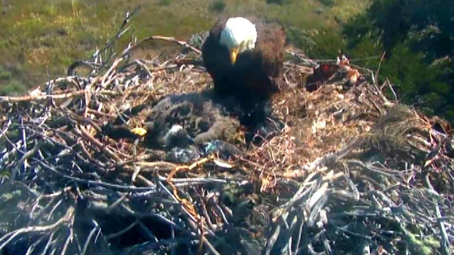 Wildlife webcams reveal animals in their natural habitats