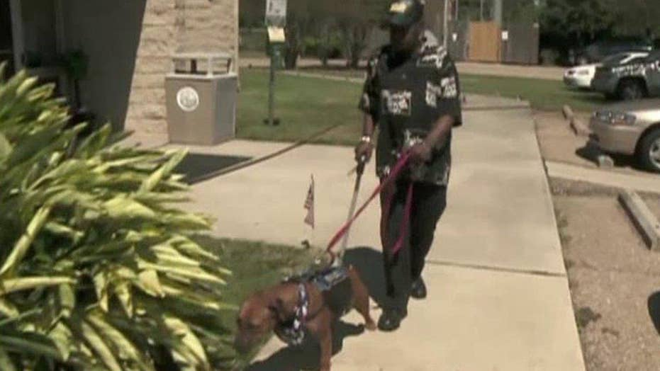 Do service dogs help or hinder vets with PTSD?