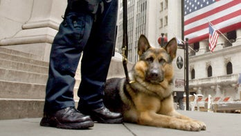 America needs more bomb-sniffing dogs raised in our own country to keep us safe