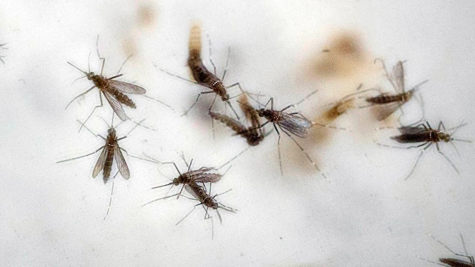 Official: Zika virus expected to hit the US this summer
