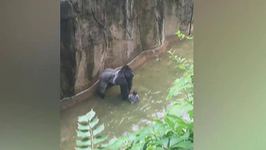 Cincinnati Zoo kills gorilla after boy falls into enclosure
