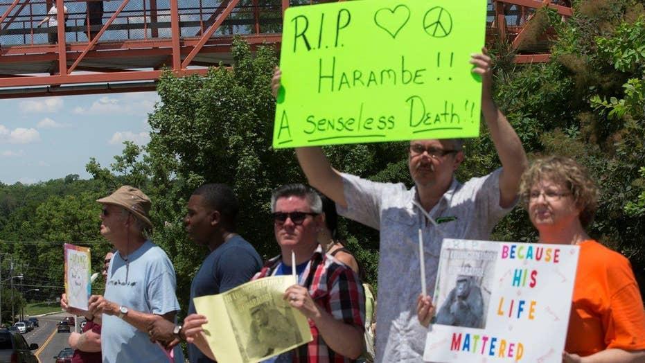 Cincinnati Zoo under fire for killing gorilla