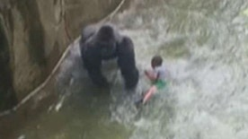 Four4Four Science: Cincinnati Zoo gorilla death controversy continues; sport of curling goes high-tech, the search for giant squids, laser helicopters could change warfare