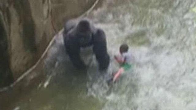 Cincinnati Zoo gorilla death: Who is to blame?