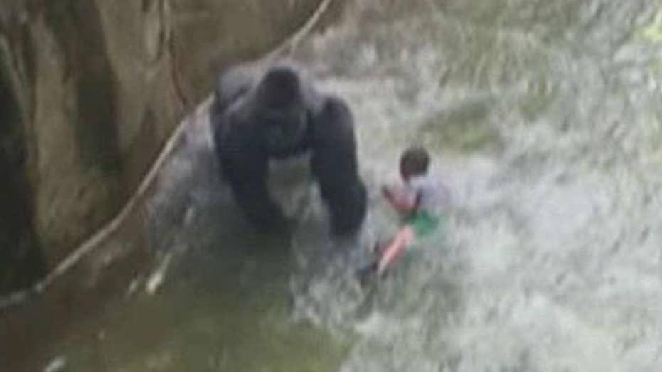 Cincinnati Zoo officials defend decision to shoot gorilla
