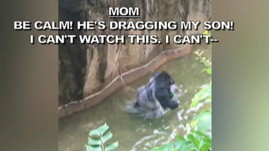 911 call from gorilla encounter released