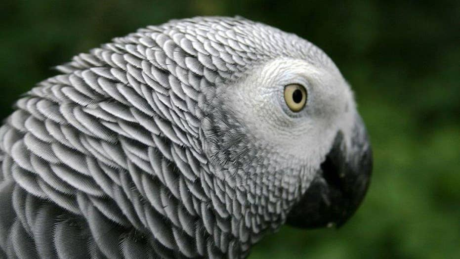 Parrot may have repeated dead man's final words