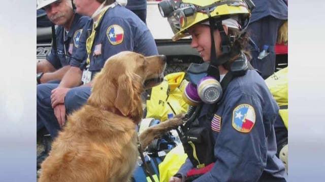 Last known 9/11 Ground Zero search dog dies