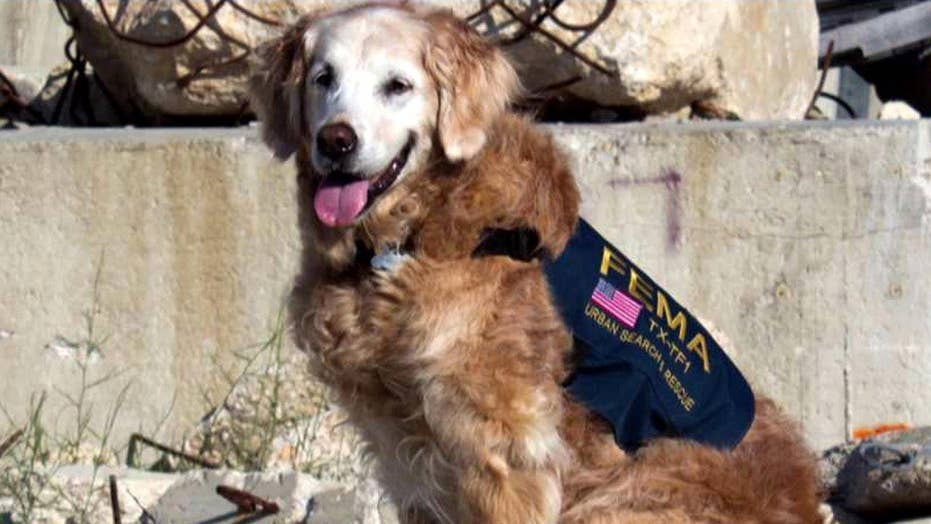 Hero's salute for last surviving 9/11 search dog