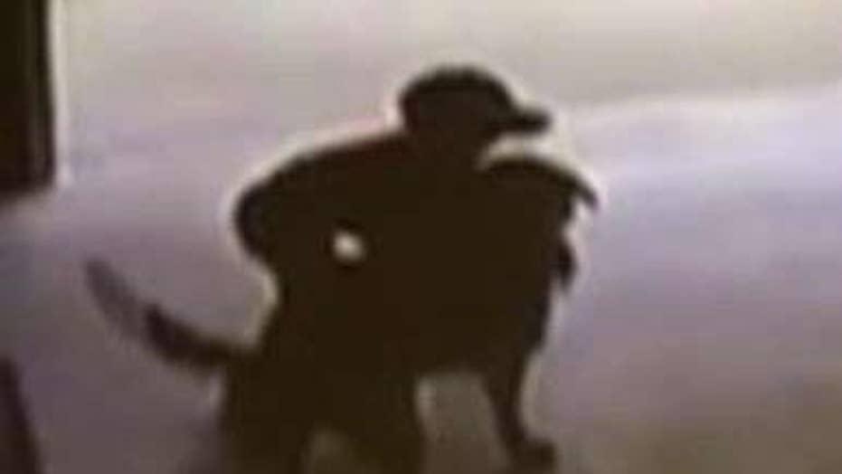 Boy breaks into neighbor's garage to hug dog