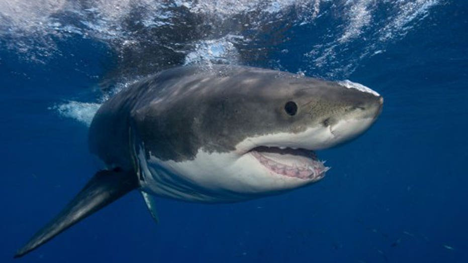 App warns beach goers if sharks are in the water