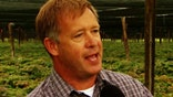'On the Record's' Griff Jenkins talks to a Wisconsin ginseng farmer who is concerned about Clinton and Trump's views on trade, especially when it comes to China