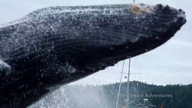 Raw video: Humpbacks put on quite a show for onlookers in British Columbia, Canada