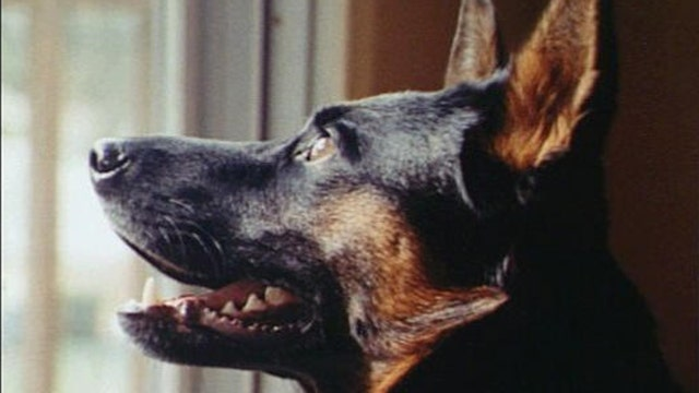 How much can dogs really understand humans?