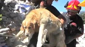 Golden Retriever named Romeo pulled from rubble