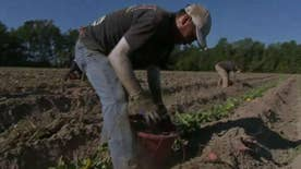 'On the Record's' Griff Jenkins visits a N.C. farm where migrants make up a large part of the work force and where potential voters stand on Donald Trump, his wall and immigration policy