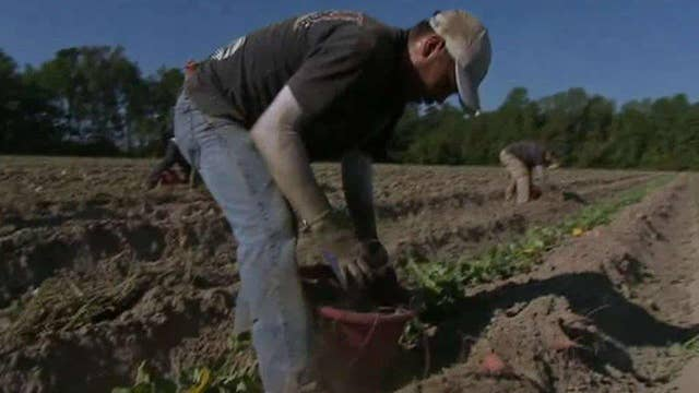 'The Deciders': Trump, a N.C farm and migrant workers
