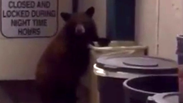 Cop issues stern warning to bear that invaded his office