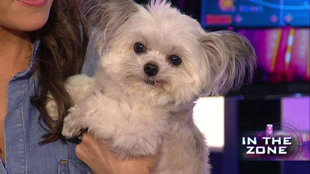 Is Norbert the cutest pup on social media?