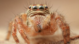 Four4Four Science: Spiders with hairy legs have amazing 'hearing'; garlic breath can be cured with apples; Europe attempts a daring Mars mission; why spotting a lie is so difficult