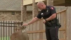Wild deer was discovered tied up behind construction site in Texas