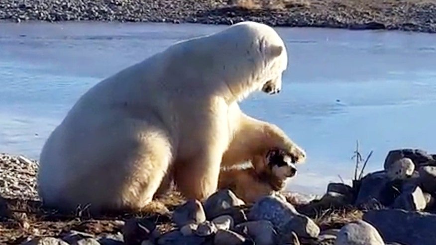 Raw video: Touching scene caught on camera in Churchill, Manitoba