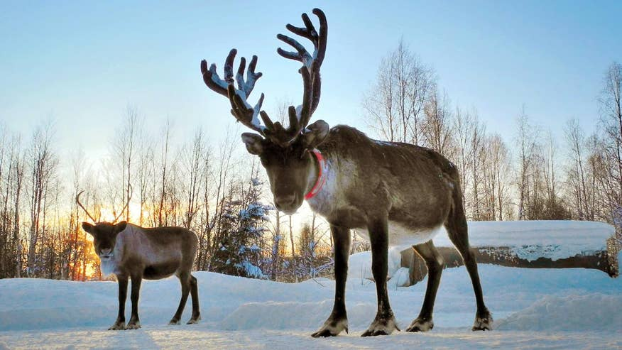 Four4Four Science: The science of reindeer antlers; battling holiday hangovers, Google Lunar X Prize teams share Moon ride, what happy rats look like