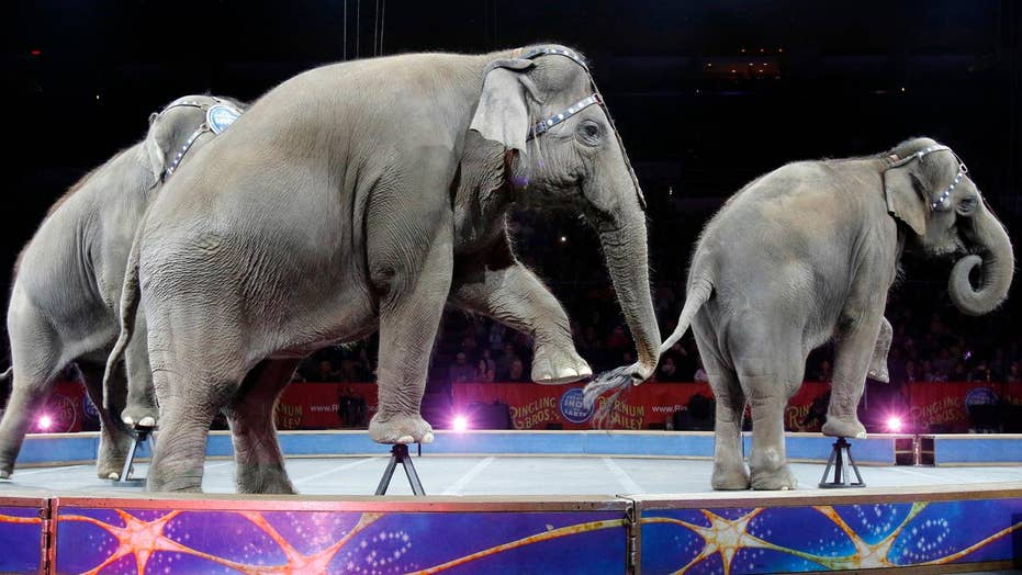 Ringling Bros. circus shutting down after 146 years
